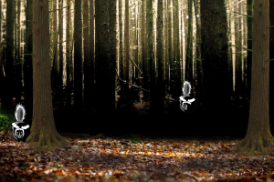 woods with skunks